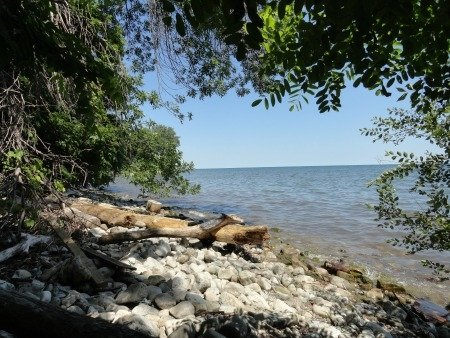 Paletta lakeshore