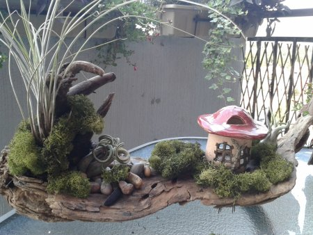 air plant garden (1)